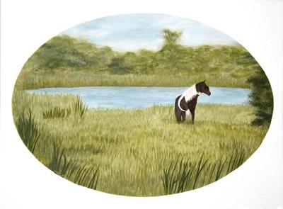 Marsh-Pony